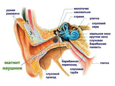 Безопасность магнитных микронаушников (нанонаушников)